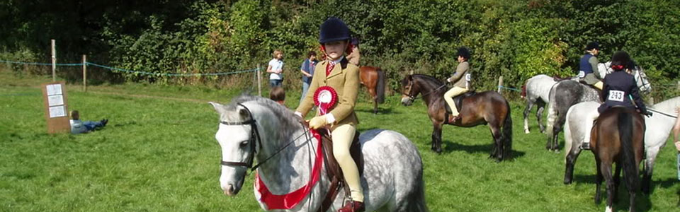 Grey Pony Winning Class At Horse Show